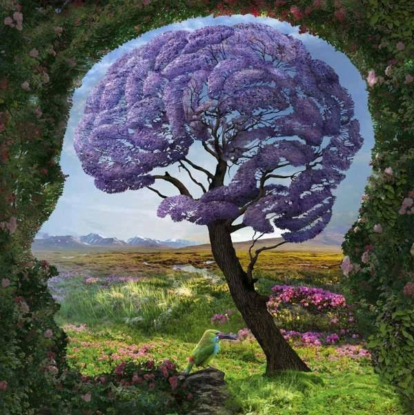 drvo mozak